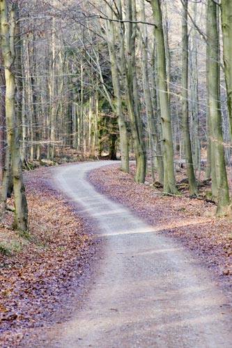The path less travelled...