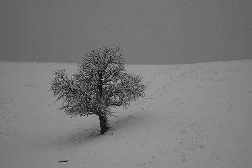 A lonely tree...